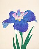 Aoi-Gata, No 30, 1890, colour woodblock print