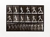 Man running, Plate 7 from Animal Locomotion, 1887