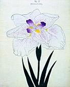 Izumi-Gawa, No 37