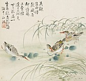 Three ducks swimming in a pool, 1857