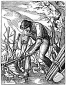 Winemaker, 16th century