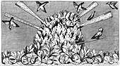 Catching birds, 14th century
