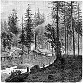 Sawmill', California, 19th century