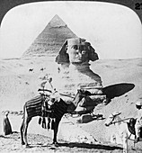 The Great Sphinx of Giza, Egypt, 1905