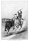 Rounding Up A Straggler On A Cattle Run', Australia, 1886