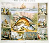 Fish, c1850