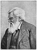 Alfred Russell Wallace, Welsh naturalist, c1895