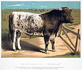 Shorthorn Bull 'Ironclad'', 1875