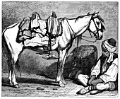 A Bosnian peasant, c1890