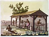 Slaves preparing tobacco, Virginia, USA. c1790