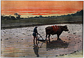 Preparation of a Rice Plantation in Japan', c1890