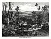 Hauling timber, Australia, 1877