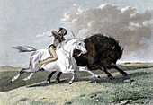 North American Indian hunting buffalo, 1861
