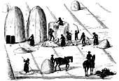 Crop rotation: threshing rye grass for seed, 1855