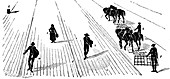 Crop rotation: sowing and harrowing corn, 1855