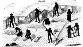 Crop rotation: harvesting corn, 1855
