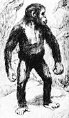 Taungs Ape-Man