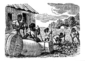 Slaves working on a tobacco plantation, 1833