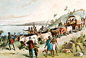 David Livingstone, Scottish missionary and African explorer