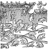 Rain of frogs recorded in 1355