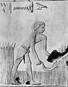 Man reaping barley with a sickle, Ancient Egyptian