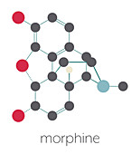 Morphine pain drug molecule
