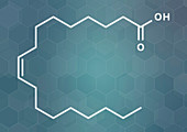 Oleic acid omega-9 fatty acid molecule
