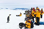 Emperor penguin tourism