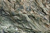 Asbestos sample