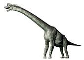 Brachiosaurus, illustration