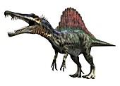Spinosaurus, illustration
