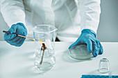 Sterilizing inoculation loop