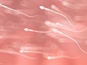 Sperm, illustration