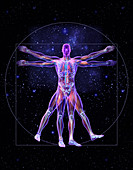 Vitruvian man, illustration