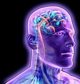 Brain activity, illustration