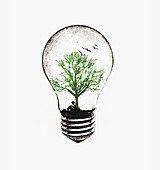Tree growing in light bulb, illustration