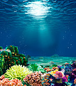 Coral reef with sunbeam, illustration