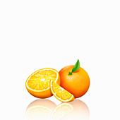 Fresh oranges, whole, half and slice, illustration