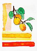 Apricots on branch, illustration