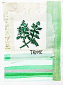 Thyme, illustration