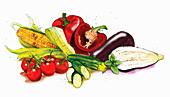Still life variety of vegetables, illustration