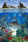 Dolphin and fish swimming underwater in ocean, illustration
