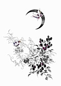 Blackberry bush and butterflies under moon, illustration