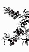 Blackberry bush with leaves and thorns, illustration