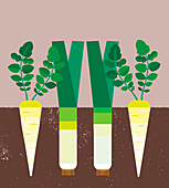 Carrots and leeks growing in soil, illustration