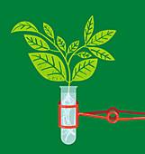 Plant seedling growing in test tube, illustration