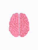 Right brain containing circuit board, illustration