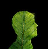 Leaf pattern on silhouette of man's profile, illustration