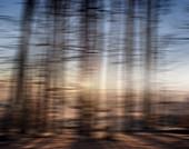 Blurred forest, illustration