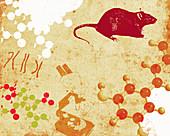 Chromosomes, molecules, microscope and rat, illustration
